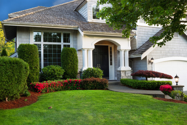 tree, lawn, plant, consulting, arborists